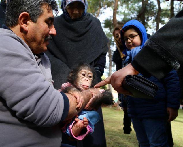 Bu süre zarfında sadece şempanzelerle ilgilendiğini aktaran Nedim Aslan şunları anlattı: 'Şempanze Can'a ilk günden bu yana bakıyoruz. Annesi doğumdan sonra bakımını yapmadı.'