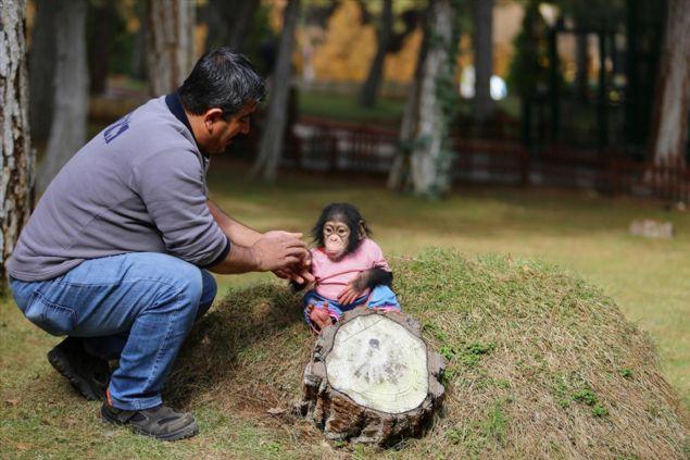 Gaziantep Hayvanat Bahçesi'nin bugünlerde çok sevimli bir sakini var: 6 aylık şempanze Can. Herkesin ilgi odağına dönüşen Can'a bakmayı annesi reddetti. Böyle olunca da Can'ın bakıcılığını, daha önce 15 yıl boyunca annesi Angel'a bakan Nedim Aslan üstlendi. Minik şempanze Can'ın da sakinleri arasına katıldığı Gaziantep Hayvanat Bahçesi, yüzölçümü ve barındırdığı türler bakımından Türkiye'de ilk, Avrupa'da 2'nci, dünyada 4'üncü sırada yer alıyor.
