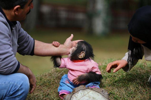 Aslan, 15 yıldan bu yana hayvanat bahçesinde görev yaptığını belirtti.
