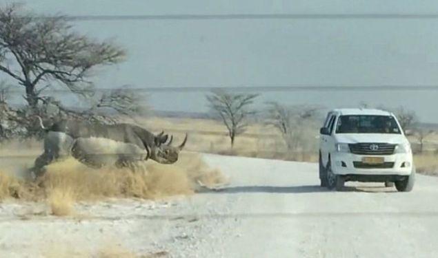 Nambiya'daki ulusal parktaki bir gergedan önce turistlerin bulunduğu aracı izledi. Gergedanın merakı hızlıca öfkeye döndü ve şiddetli bir şekilde cipe çarptı.