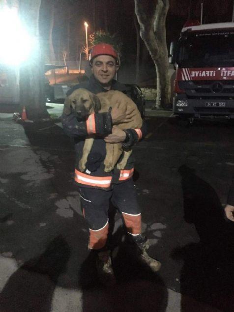 Beykoz Dereseki köyünde 70 metre derinliğindeki sondaj kuyusuna düşen yavru köpek ekipler tarafından kurtarma çalışmalarının 10. gününde kurtarıldı.