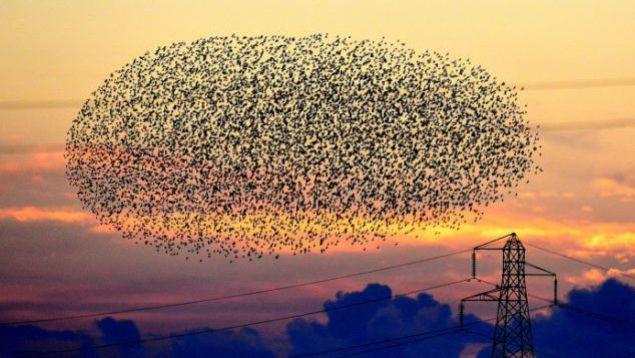 53 yaşındaki fotoğrafçı Daniel Biber, İspanya'da binlerce kuşun oluşturduğu dev kuş görüntüsünü ölümsüzleştirdi!