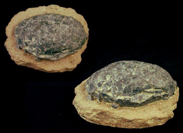 Çin'de Jura çağına ait olduğu belirtilen 130 milyon yıllık dinozor yumurtaları bulundu.