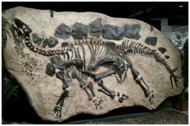 Milyonlarca yıllık fosil şaşkına çevirdi