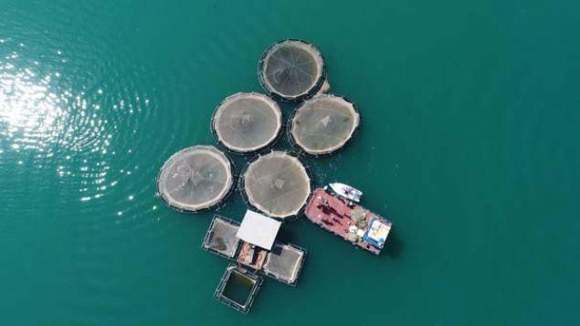 Fırat Nehri'nde kafes balıkçılığı yapan işletmeler, başta Rusya ve Almanya olmak üzere birçok ülkeye alabalık ihraç ediyor.
