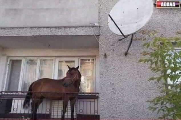 İnternet ortamında sıkça paylaşılan birbirinden komik ve ilginç fotoğraflar