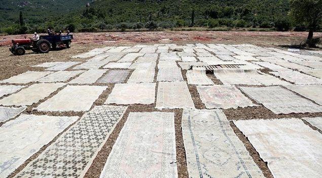Antalya'da tarlalar halı açtı