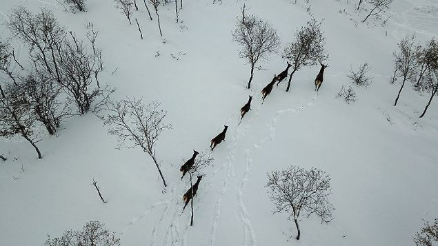 Çorum'daki Türkiye'nin ilk fauna tanıtım alanında kış güzelliği