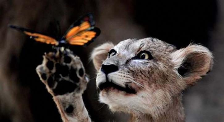 Gününüze güzellik katacak sevimli hayvanlar