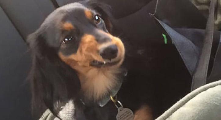 Veterinerden korkan köpeklerin komik tepkileri