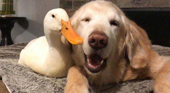 Hayvanların içinizi ısıtacak dostlukları