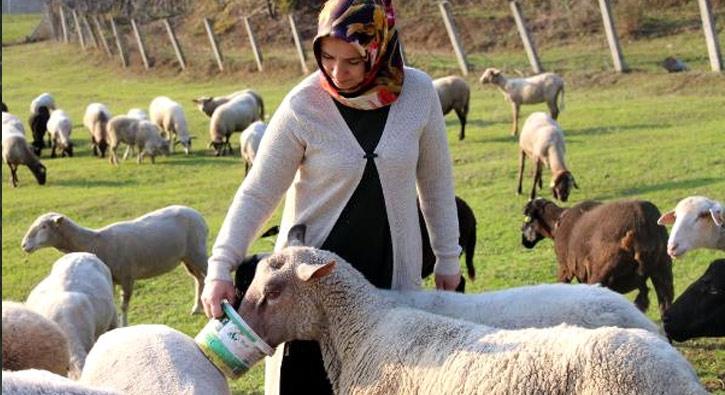 300 koyun ve maaş desteği başvuru işlemi ve şartları