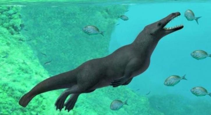 Balinalar yürüyebiliyormuş, 43 milyon yıllık 4 bacaklı balina fosili bulundu