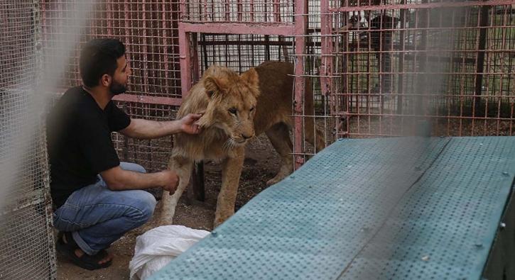 İsrail ambargosunun etkisi altındaki hayvanat bahçesinin kafesleri açıldı