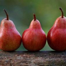 Mide sağlığına iyi gelen besinler