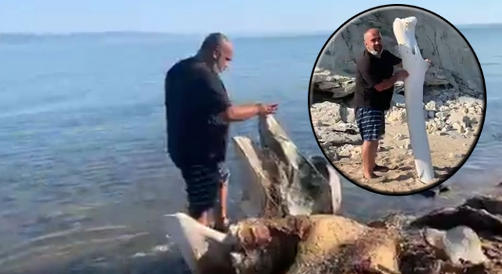 Edirne'de kıyıya vuran kemikler şaşkınlığa neden oldu