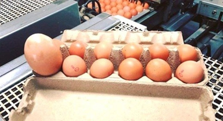 Dev yumurtanın içinden çıkan şey şoke etti!