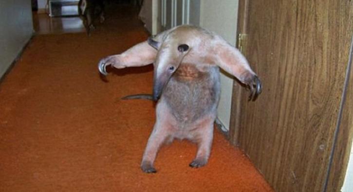 Dünyanın en garip evcil hayvanları