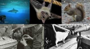 İlginç yöntemlerle savaş ve casuslukta kullanılan hayvanlar
