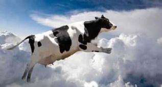 Gökten kar değil inek yağdı! İşte gökyüzünden yağan en ilginç nesneler