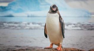 Hayvanlarla ilgili etkileyici gerçekler