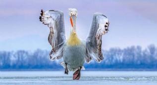 2019 yılının en iyi kuş fotoğrafları