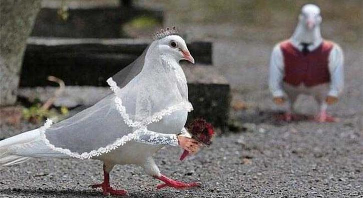 Hayvanları photoshopla bakın ne hale soktular