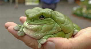 Dünyanın en garip canlıları şaşkına çevirdi