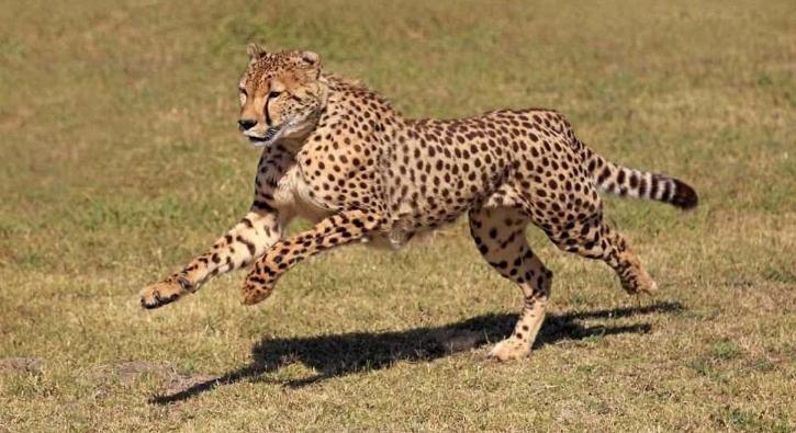 Dünyanın en hızlı hayvanları hangileri?