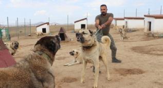 Türk sınırları onlara emanet! Teröristlere geçit vermeyecekler