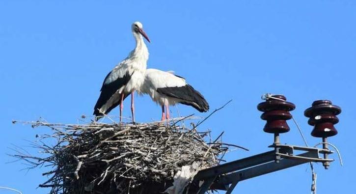 'Muş Ovası' çeşitli kuş türlerini ağırlıyor