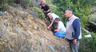 Kayalıklarda öyle bir şey buldu ki... 300 milyon yıl önceki gerçeği ortaya çıkardı