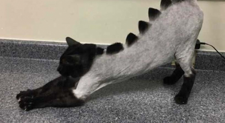 Dinazor kediler