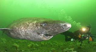 Dünyadaki en yaşlı hayvan bulundu! 512 yaşında...