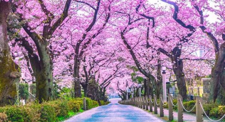 Dünyanın en büyüleyici ağaç tünelleri