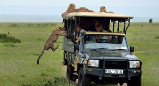 Çita bir anda turist cipine saldırdı