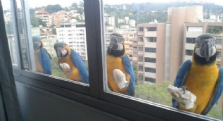 Pencereye tırmanan kuşların o anları