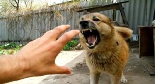 Saldırgan köpeklere karşı yapılması gereken 5 hareket