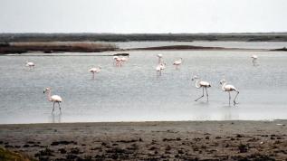 Gala Gölü'nün rengarenk misafirleri