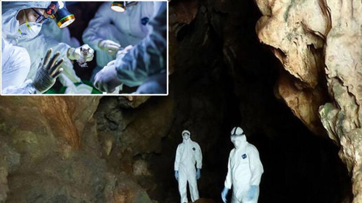 Koronavirüsün çaresini bu mağarada arıyorlar