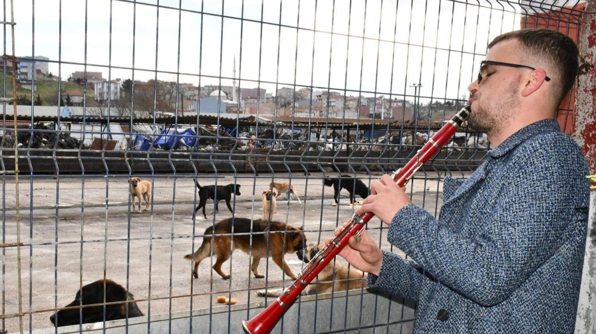 Sokak hayvanlarına bu yöntemle yaklaşıyor