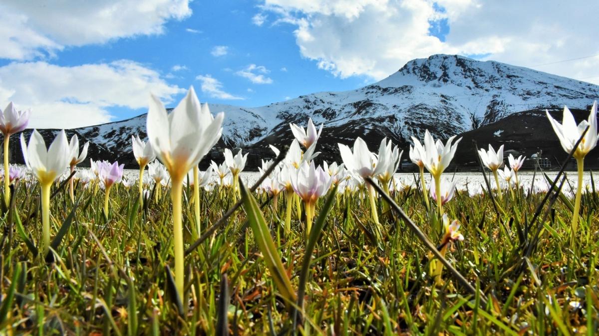 Görüntüsü büyüledi! Baharın müjdecisi çiçek açtı