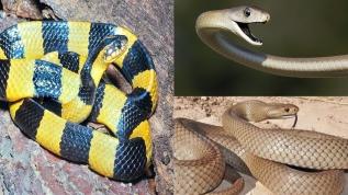 İşte dünyanın en korkunç ve zehirli 9 yılan türü! 1. sıraya şaşıracaksınız