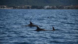 Yer: Antalya... Sürü halinde böyle avlandılar