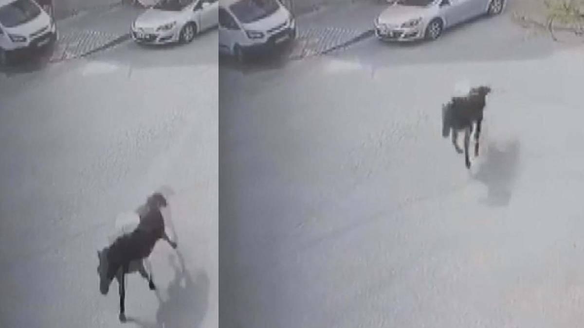 Arnavutköy'de inanılmaz olay! Güvenlik kamerasını izleyince şok yaşadı