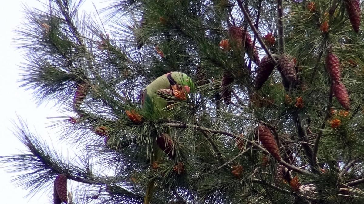 Şaşırtan görüntü... Ağaçları mesken tuttular!