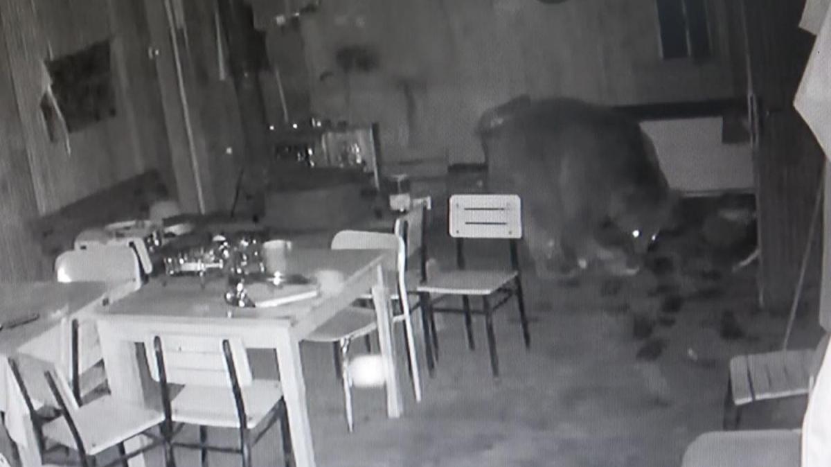 Aç kaldı, kapıyı kırıp alabalık tesisine daldı
