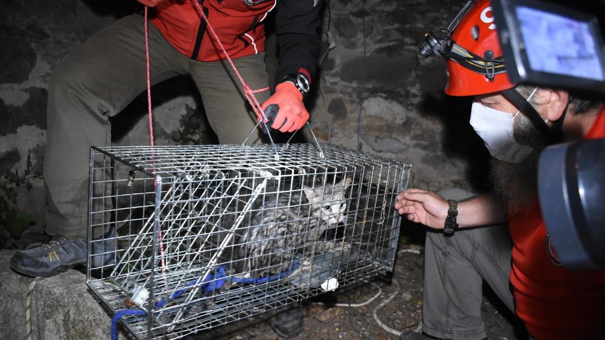 Bodrum'da kuyuya düşen kedi, ekiplerin kullandığı şişme botla kurtarıldı