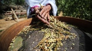 Filistin'de ramazan sofralarının vazgeçilmezi