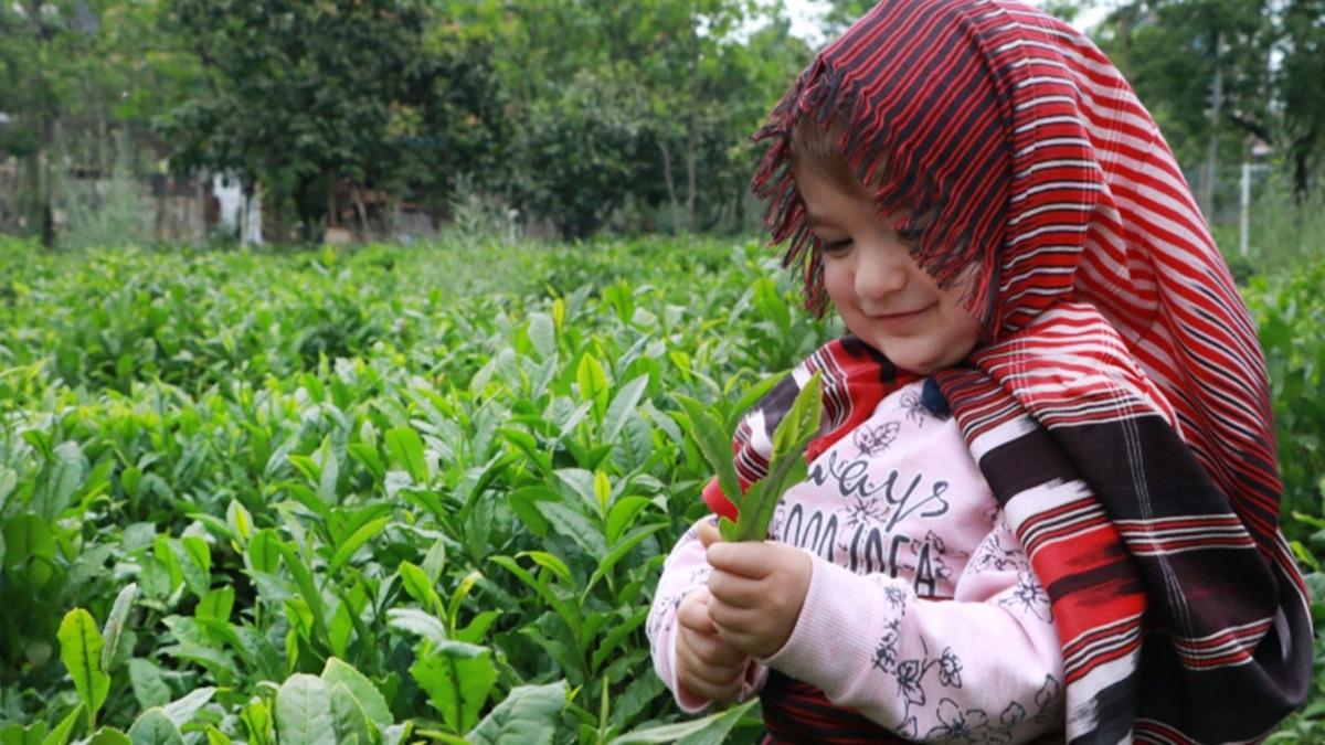 Yollarda bereketli hasadın yoğunluğu sürüyor... Çay üreticisinin seyahat izni ikinci gününde